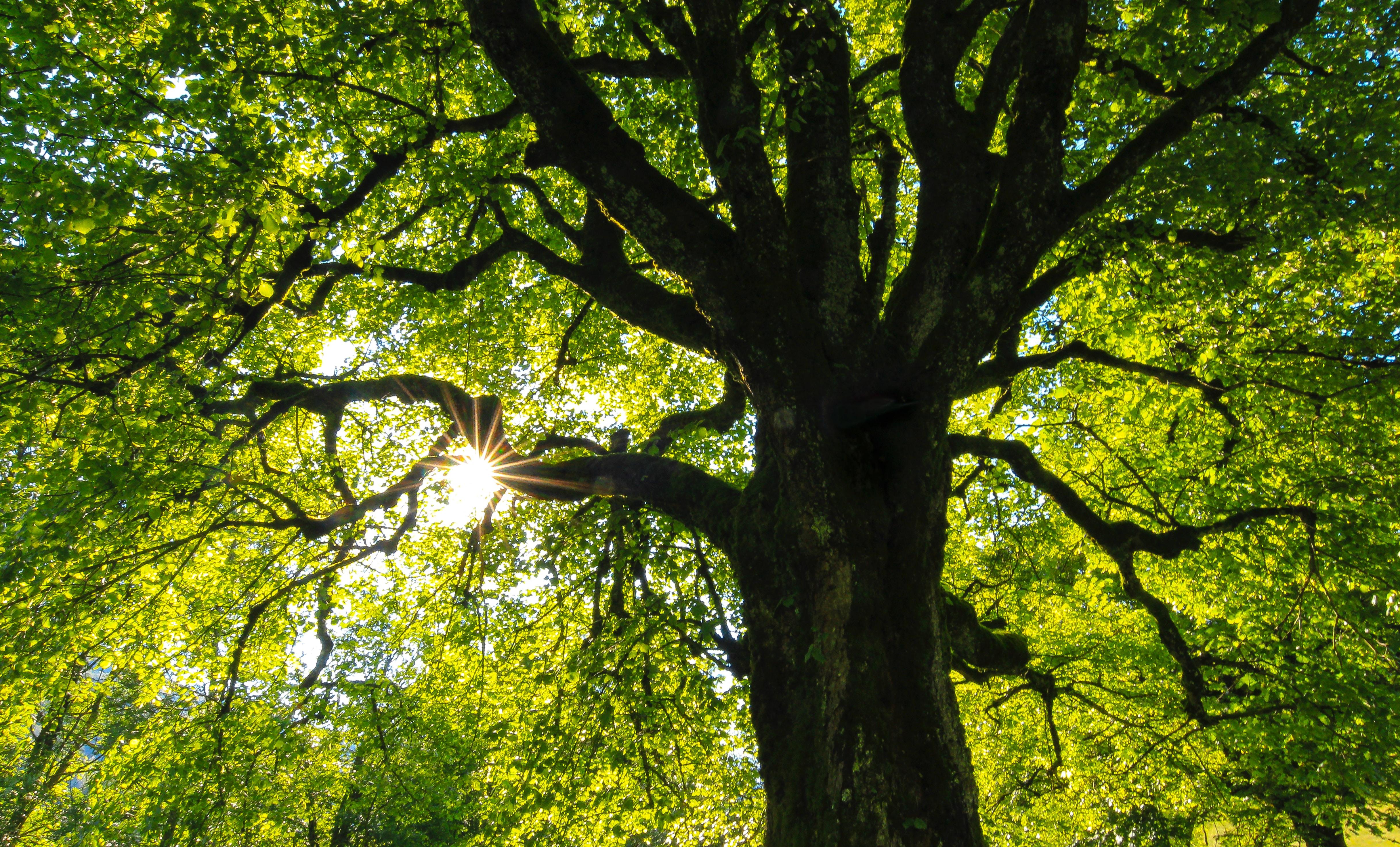 Tree Hugging on